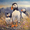 Painting of Puffins